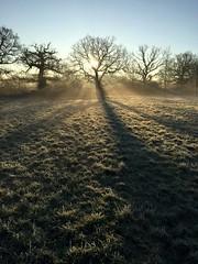 Dawn Sunrise (Heaven`s Gate (John)) Tags: misty sunrise dawn trees silhouette johndalkin heavensgatejohn shadows winter frost grass field blue sky atmosphere landscape 25faves 50faves
