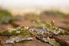 DSC_0057 (Bescare) Tags: bokhe rugiada goccioline brina freddo inverno