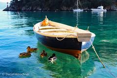 Portofino's Bay (danielkörschner) Tags: italy portofino boat sea blue colourful ducks bird duck bay harbor holiday capodanno water 2016 2017