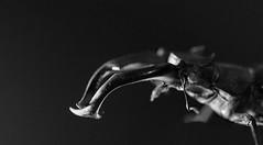 Ciervo volante nocturno (elmagodelabahia) Tags: escarabajo beetle insecto insect ciervovolante lucanuscervus macho male flash flashlight macro bnw byn blancoynegro blackandwhite coleoptera coleóptero mandíbulas jaws