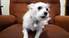017 - Oh My (jbpro) Tags: puppy dog 365 days photo challenge january white