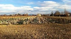 Vista da casa mia. (MarioLaser) Tags: periferia treviso quartiere coltivazione terreo agricolo
