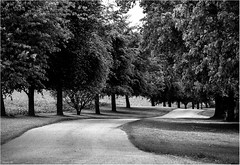 Roadway Through The Trees (andihun65) Tags: blackandwhite mono eastwell kent pathway trees canon60d canon70200mmf4