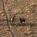 Sunrise Hot Air Balloon ride over the Masai Mara