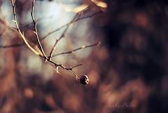 - (-LilyBeth) Tags: bokeh dof depthoffield nature natura nikon winter wonderfulworld outside colors inverno 50mm d3000