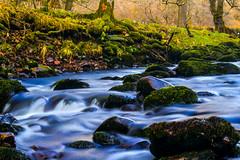 #enchanting #forest #longexp (AmySam87*) Tags: enchanting forest longexp