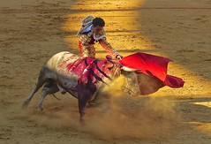 Dax 2016 (Micheline Canal) Tags: france dax corrida animal torero