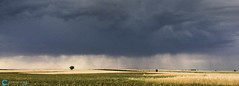 PerfectPixel_15_05_29_1459 (tefocoto) Tags: madrid sky espaa storm rain clouds lluvia spain wheat grain cereal cielo nubes tormenta agriculture trigo teco grano chinchn agricultura pablosaltoweis belmontedetajo