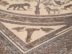 P5261330 (lnewman333) Tags: africa ancient northafrica mosaic historic worldheritagesite morocco fez maroc maghreb fes volubilis romanruins unescosite 1stcenturyad