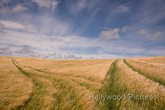 DSC_6062 (Fran Hollywood Autosportpics.com) Tags: ireland summer sky field barley clouds rural landscape countryside farming cereal harvest crop wexford sunnysoutheast leinster arable curracloe