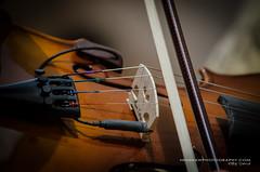 Strings of Delight (Digidiverdave) Tags: portrait music spain band entertainment menorca baleares mahon davidhenshaw laxarangadelxubec henshawphotography