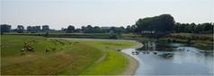 Cooling-down (Joep Hendrix) Tags: horses nature water river landscape belgium nederland belgi natuur zomer brug maas limburg landschap paard paarden rivier maaseik konik konikpaarden limburgslandschap maasbrug roosteren aldeneik