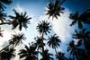 Auswahl-5861 (wolfgangp_vienna) Tags: sunshine thailand island asia asien resort insel ko trat kut kood aophrao kokood kokut kohkut thesunshineresort