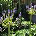 Schöste Blumen in den Garten