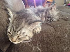 178/365 Kitten pile