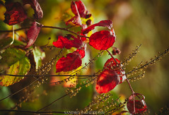 foliage (Sandro Gherbassi 1968) Tags: foliage autumn italy 5terre autunno bokeh colors colorful nikon nikkor red green