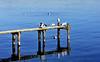 Squatté par les mouettes (Diegojack) Tags: saintprex ponton oiseaux mouettes léman eau reflets