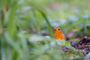Bonne année 2017 à tous !!! (Jacques GUILLE) Tags: 09 ariège domainedesoiseaux erithacusrubecula europeanrobin jacquesguille mazères muscicapidés passériformes rougegorgefamilier bird oiseau