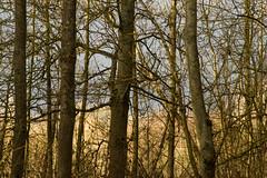 20170104-_IMG1008-Edit (fleetingphotons) Tags: pentaxk1 smcpentaxa200mmf28ed wasingestate fishing warrenbeat kennet trees