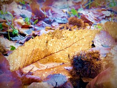 2017-01-09 dead leaves (103) (april-mo) Tags: wood bois brume fog foggy brouillard winter hiver january deadleaves feuillesmortes