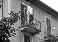 in un giorno d'estate (mariarita.g) Tags: 2016 bn balcone pannistesi ringhiera