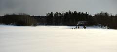 Winter landscape (gerhardschorsch) Tags: sony zeiss za ilce7r 7r a7r available fe55mmf18za 55mm f18 landschaft landscape schnee flora wald winter snow