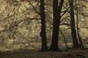 Beech Trees, Rugen (DidaK) Tags: rugen trees beech germany balticsea forest europe