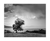 Sentinal (Mike Hankey.) Tags: published landscape tasmania roadtrip travel huonvalley