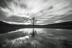Lone Hawthorn Tree (Craig Hannah) Tags: tree hawthorn longexposure diggle saddleworth pennine reflection bigstopper clouds sky lone craighannah february 2017 winter nature bw westriding yorkshire oldham greatermanchester england uk countryside farmland
