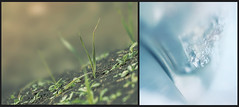 perspective (rockinmonique) Tags: 52in52 diptych frost grass cold warm blue green macro light bokeh moniquew canon canont6s tamron copyright2016moniquewphotography