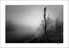 Misty Frozen (tmuriel67) Tags: niebla mist fog atmosphere frozen mystery river