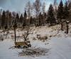 abandoned (Luana 0201) Tags: wagon brushwood