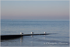 Paires de tierces (Christophe Hamieau) Tags: bassenormandie calvados channel continentsetpays europe fr fra france houlgate manche normandie normandy beach bouées buoys mer mouettes plage sea seagulls