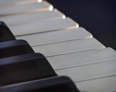 Macro Monday - Inspired by a Song (peggypryor68) Tags: keys january on1enhance macro ebonyandivory macromonday piano 192017