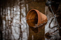 S.O.S. 19/365 (Watermarq Design) Tags: water rain flood yard 365project vanishing sinking