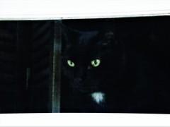 Squeek Looks Out (Lana Pahl / Country Star Images) Tags: catsandwindows doorsandwindowsproject theartofwindows windowwednesday windowwednesdays friendsofgracieandmillie