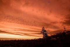 Waiinu: 8.2.2017 at 19:35h (m+m+t) Tags: dscf36941 mmt meredithbibersteindesign newzealand northisland taranaki waiinubeach coast sky evening sunset clouds silhouette trees fujixt1 fujixseries fujimirrorless 1855mm windy gale wild storm outdoors landscape