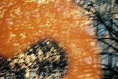 no title (biancarosa.looman) Tags: analog outdoor handheld reflection shopwindow orange tree singleexposure nophotoshop
