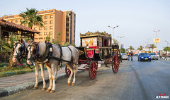 (Ayman Abu Elhussin) Tags: life street old people horse art history tourism car architecture garden hotel town cityscape handmade egypt royal portsaid arab age welcome cart   cabriolet  ayman     misr          madeinegypt            aymanabuelhussin pursaid