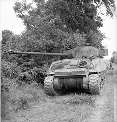 Sherman Firefly tank alongside a hedge, Normandy, 16th June 1944