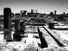 P5261304 (lnewman333) Tags: africa blackandwhite ancient northafrica historic worldheritagesite morocco fez maroc maghreb column fes volubilis romanruins unescosite 1stcenturyad