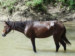 Escenario: Fauna-Ambiente (ecriminao) Tags: venezuela oriente 2012 sucre vacaciones2012