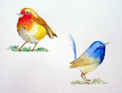 Two birds, by Mônica - DSC00358 (Dona Minúcia) Tags: cute bird art beauty animal watercolor painting paper arte natureza passarinho pássaro study beleza fofo pintura belo aquarela gracinha