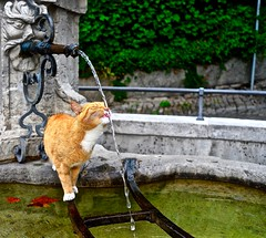 thirsty cat / Berne / Switzerland (_dreamseller_) Tags: leica water fountain animal cat schweiz switzerland funny wasser brunnen drinking lustig bern katze trinken sipping berne thirsty x2 durstig leicax2