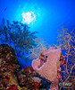 Reaching for the Sun (SWD-Photography) Tags: sunburst grandcayman scuba vasesponge underwater sponge