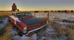 The Laurentian (Len Langevin) Tags: abandoned old car building grainelevator ghosttown pontiac laurentian derelict forgotten alberta canada prairie winter snowy cattle nikon d300s tokina 1116