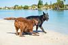 IMG_2002 (megscapturedtreasures) Tags: ammo sun sunset dog beach dogs ruff days daycare