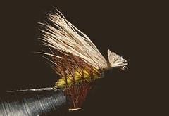 EHC-pom (Guyser1) Tags: fishingflies caddisfly elkhaircaddis nikond3200