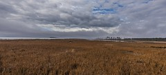 Blackwater Saltmarsh In Winter (Odonata457) Tags: cambridge maryland unitedstates blackwaterwildliferefuge saltmarsh
