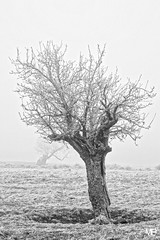 l'arbre DxOFP AdoxCHS100II DSF2850 (mich53 - thank you for your comments and 5M view) Tags: givre froid hiver saisons campagne solitude brouillard brume arbres monochrome « noir blanc » explore arbre mort silhouette helada frío invierno temporadas campaña soledad niebla árboles monocromo blancoynegro explora árbolmuerto silueta 4winter fujifilm xf1655mmf28rlmwr xt1 îledefrance tant frosted cold winter seasons campaign fog mist trees blackwhite deadtree frost kalt jahreszeiten kampagne einsamkeit nebel bäume einfarbig explores toterbaum nature 霜 冷たいです 冬 季節